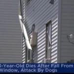 ΗΠΑ: Τρίχρονος Έπεσε Από Το Μπαλκόνι Και Τον Έφαγαν Σκυλιά