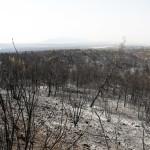 καμένη έκταση από τη φωτιά στη Βαρυμπόμπη