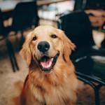 διακοπές με τον σκύλο