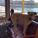 σκύλος πλοίο