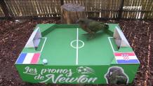 Ο παπαγάλος στο mini γήπεδο ποδοσφαίρου