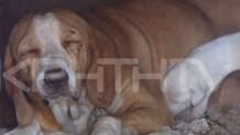 Η σκυλίτσα που δέχθηκε την επίθεση