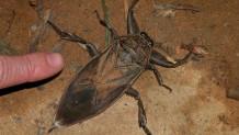 Το έντομο