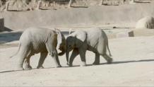 ελεφαντάκια