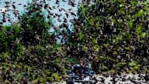 Πέπλο από αγριοπούλια στον ουρανό της Αταλάντης