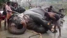 Ιεροί ελέφαντες απολαμβάνουν spa στην Ινδία