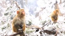 πίθηκοι
