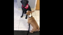 Σκύλος γαυγίζει όλο χαρά σε… αληθοφανές άγαλμα σκύλου