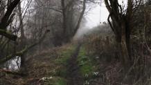 Κάμερα καταγράφει φάντασμα σε δάσος