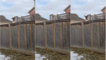 Σκύλος χοροπηδάει σε τραμπολίνο