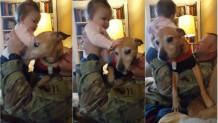 """Σκύλος και μωράκι δίνουν """"μάχη"""" για μια αγκαλιά"""