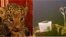 Λεοπάρδαλη και το μωράκι της