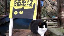 Γάτες Οι Κάτοικοι Του Χωριού Χουτόνγκ Ταϊβάν