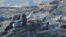 θαλάσσιοι ίπποι