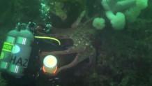 Δύτες ανακαλύπτουν τεράστιο χταπόδι στον βυθό του Βανκούβερ