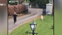 Viral Αντιμέτωπη Με Μια Κατσίκα