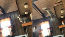 Γάτα κάνει fail άλμα