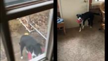 Σκύλος σε πόρτα