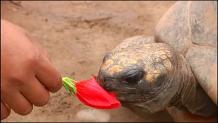 χελώνες πάρτι