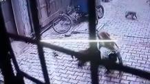 μαϊμούδες επιτέθηκαν σε άνδρα