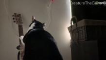 γάτα παίζει κιθάρα