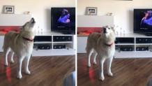σκύλος-όπερα