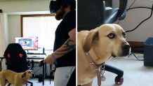 σκύλος videogame