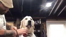 Σκύλος στον μπαρμπέρη