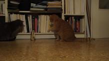 Γάτες παίζουν με μετρονόμο