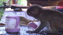 κινέζος υιοθέτησε μαϊμού