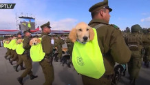 Τα κουτάβια της αστυνομίας έκλεψαν την παράσταση σε στρατιωτική παρέλαση!