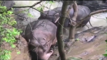 Ελέφαντες στο εθνικό πάρκο της Ταϊλάνδης