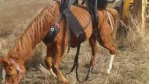 άλογο φρεάτιο