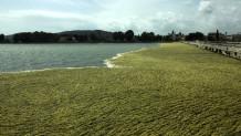 λιμνοθάλασσα Αιτωλικό