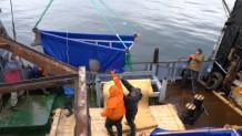 η απελευθέρωση φαλαινών μπελούγκα