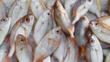 ψαριά