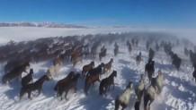 άλογα τρέχουν