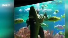βαλς Αη-Βασίλη με καρχαρία