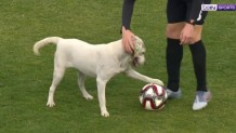 σκυλάκι με μπάλα