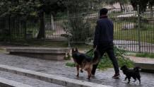 Ιδιοκτήτης Σκύλου