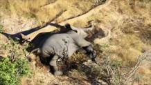 θάνατος ελεφάντων