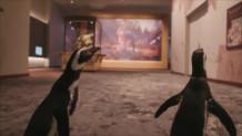 ζευγάρι πιγκουίνων συνάντησε δεινοσαύρους