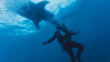 Δύτης - Καρχαρίας