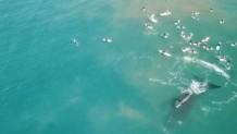 σέρφερς αντιμέτωποι με φάλαινες