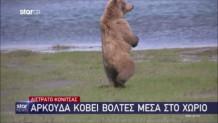 αρκούδα στην Κόνιτσα