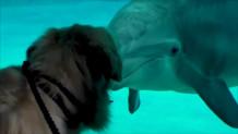 σκύλος- δελφίνι