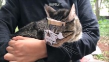 μάσκα για γάτες