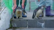 πιγκουίνοι νερό
