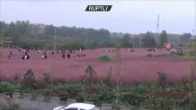 Kίνα-ροζ λιβάδια