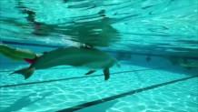 ρομπότ- δελφίνια